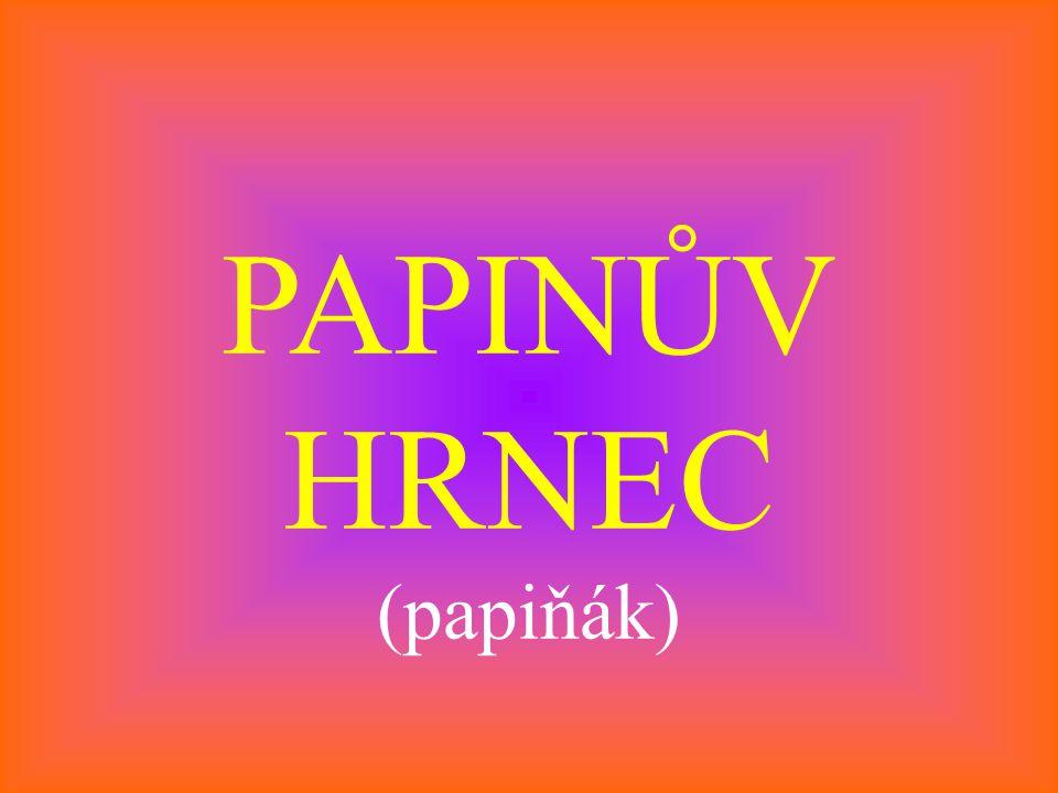 PAPINŮV HRNEC (papiňák)