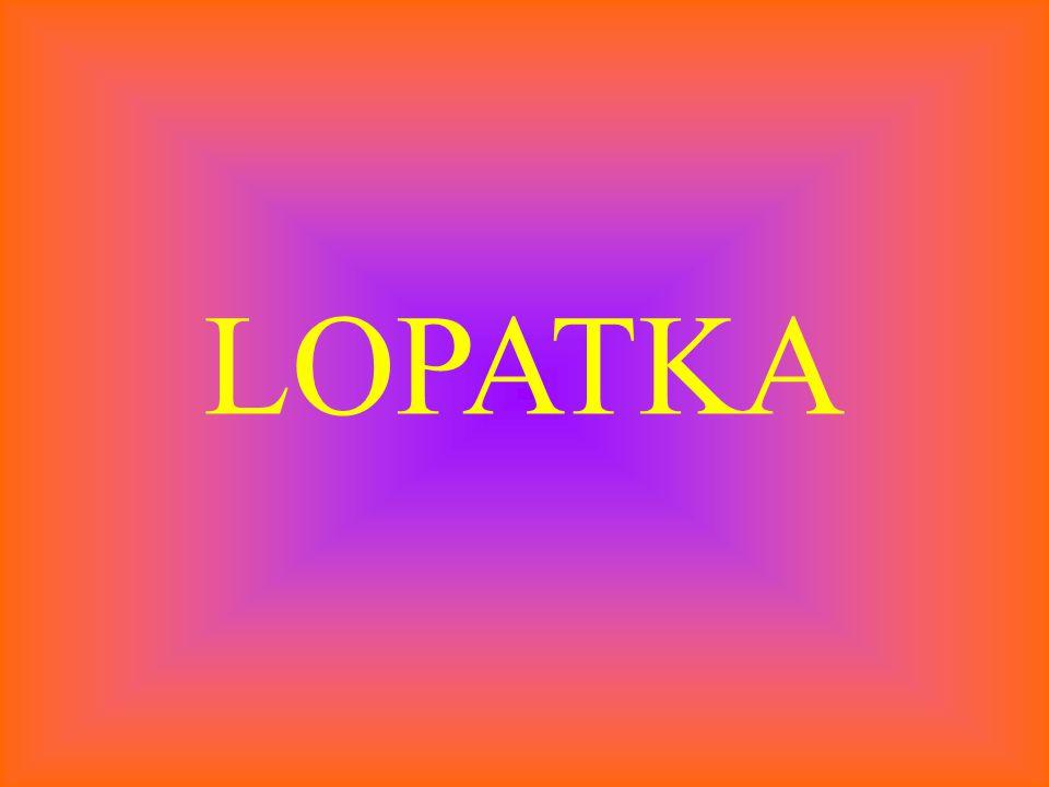 LOPATKA