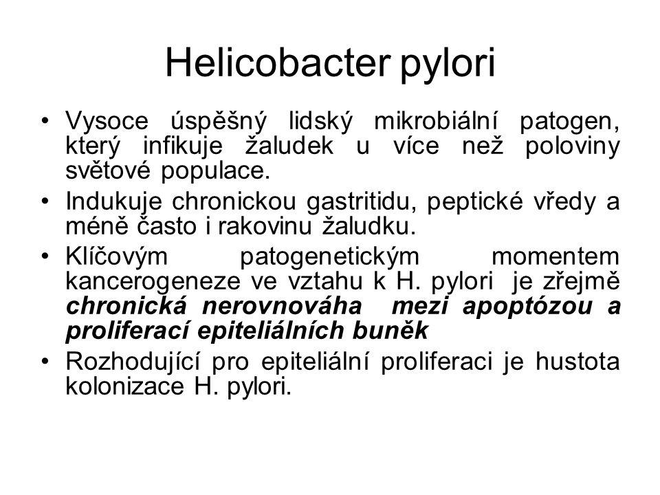 Helicobacter pylori Vysoce úspěšný lidský mikrobiální patogen, který infikuje žaludek u více než poloviny světové populace. Indukuje chronickou gastri