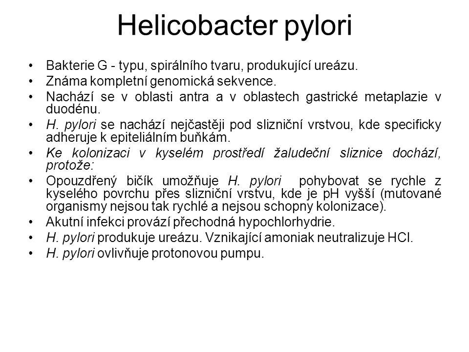 Helicobacter pylori Bakterie G - typu, spirálního tvaru, produkující ureázu. Známa kompletní genomická sekvence. Nachází se v oblasti antra a v oblast