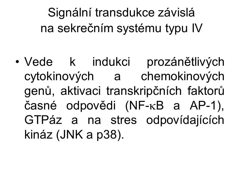 Signální transdukce závislá na sekrečním systému typu IV Vede k indukci prozánětlivých cytokinových a chemokinových genů, aktivaci transkripčních fakt