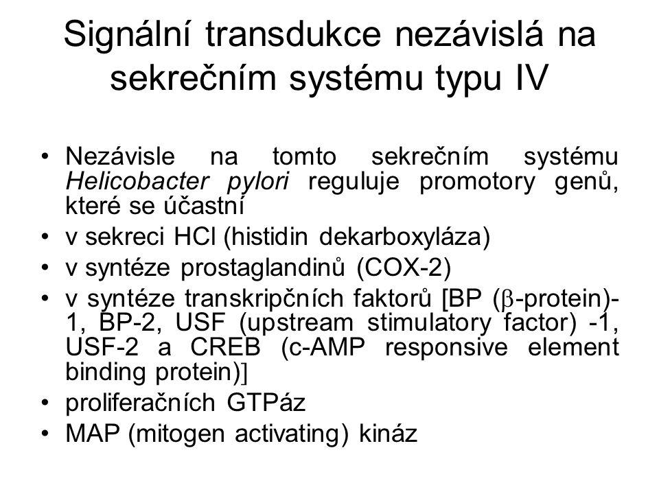 Signální transdukce nezávislá na sekrečním systému typu IV Nezávisle na tomto sekrečním systému Helicobacter pylori reguluje promotory genů, které se