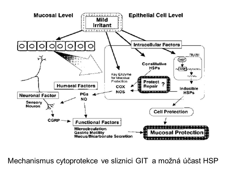 Mechanismus cytoprotekce ve sliznici GIT a možná účast HSP
