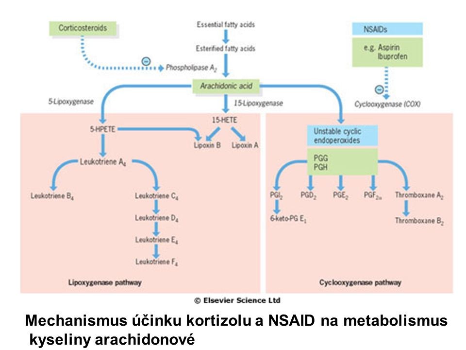 Schématické prezentace mechanismů závislých a nezávislých na kyslíku v průběhu neutrofilní fagocytózy bakterií (k následujícímu obrázku) Mechanismy nezávislé na kyslíku ovlivňují obsah granulí Mechanismy závislé na kyslíku zahrnují NADPH-cestu