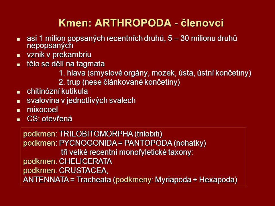 řád: Opilionida = Opiliones, sekáči asi 4000 druhů (v ČR cca 30) asi 4000 druhů (v ČR cca 30) v opadance, pod kůrou a kameny, epigeicky, na vegetaci v opadance, pod kůrou a kameny, epigeicky, na vegetaci od 2 mm (Sironidae – připomínají roztoče) do 22 mm (největší druh Trogulus torosus).
