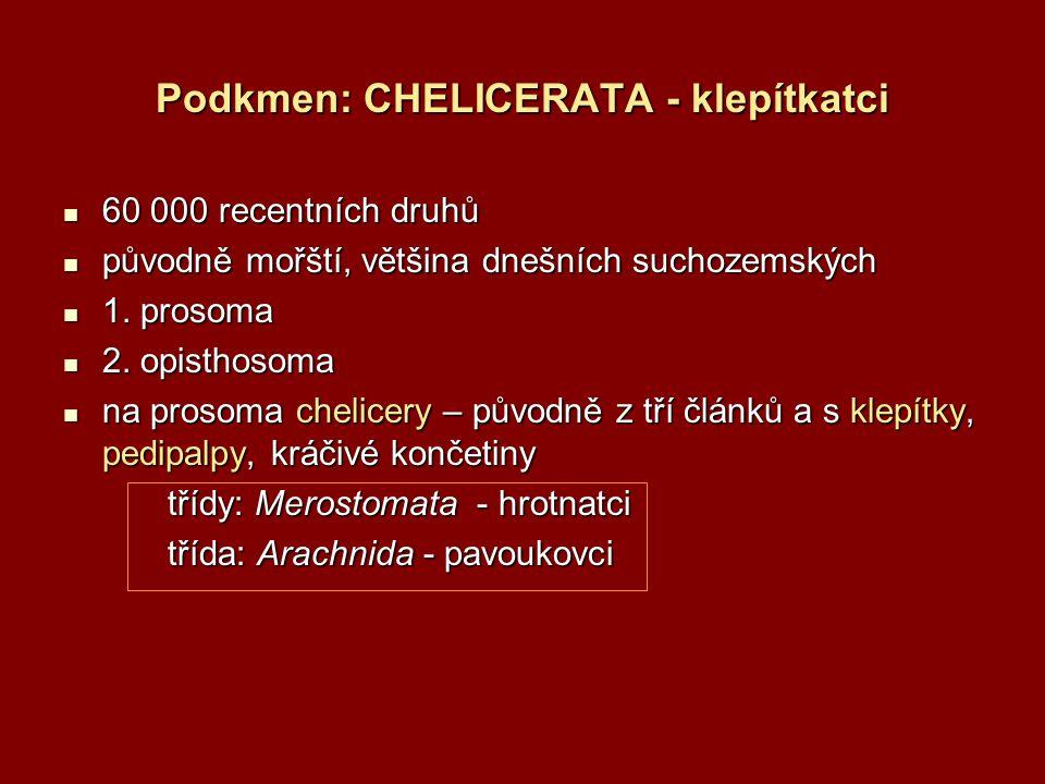 Třída: Merostomata - hrotnatci vymřelý řád kyjonožci (Gigantostraca) recentní řád: Xiphlosura ostrorepi 1.
