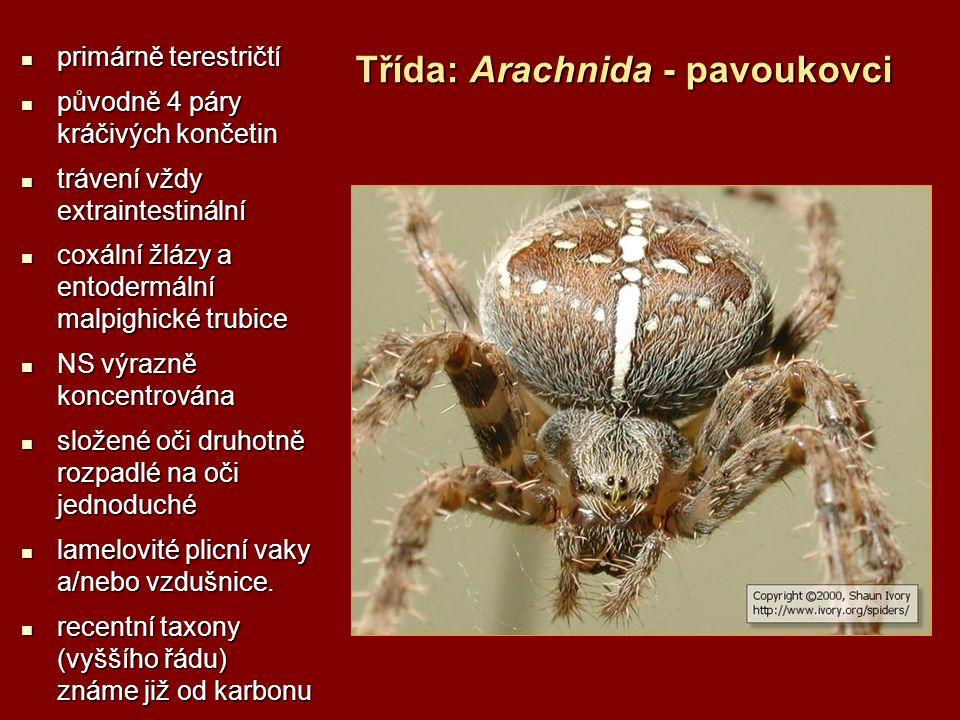 Třída: Entognatha - skrytočelistní (hmyz) hlava: kusadla a čelisti volné, bičík tykadla bez svalovity hlava: kusadla a čelisti volné, bičík tykadla bez svalovity hlava: oculi, ocelli, tykadla, labrum, mandibuly, maxily a labium hlava: oculi, ocelli, tykadla, labrum, mandibuly, maxily a labium hruď: prothorax, mesothorax, metathorax hruď: prothorax, mesothorax, metathorax končetina: coxa, trochanter, femur, tibia, tarsus, praetarsus končetina: coxa, trochanter, femur, tibia, tarsus, praetarsus u podtřídy Pterygota jsou na mesothoraxu a metathopraxu primárně křídla u podtřídy Pterygota jsou na mesothoraxu a metathopraxu primárně křídla křídla: blanitá, krovky, polokrovky, krytky křídla: blanitá, krovky, polokrovky, krytky zadeček: přívěsky končetinového původu - styli, cerci, klíšťky, kladélka, žahadla, dýchací trubičky, kopulační nožky zadeček: přívěsky končetinového původu - styli, cerci, klíšťky, kladélka, žahadla, dýchací trubičky, kopulační nožky TS: stomodeum, mesodeum, proctodeum TS: stomodeum, mesodeum, proctodeum VS: malpigické trubice VS: malpigické trubice CS: otevřená, hřbetní céva, srdce, žene krev zezadu dopředu CS: otevřená, hřbetní céva, srdce, žene krev zezadu dopředu DS: tracheální, vyztužená spirálovitou chitinovou intimou, stigmata DS: tracheální, vyztužená spirálovitou chitinovou intimou, stigmata vnější tracheální žábry, vnitřní tracheální žábry vnější tracheální žábry, vnitřní tracheální žábry NS: nadhltanová a podhltanová uzlina, chemo a mechanoreceptory na tykadlech NS: nadhltanová a podhltanová uzlina, chemo a mechanoreceptory na tykadlech rozmnožování: hemimetabolní a holometabolní rozmnožování: hemimetabolní a holometabolní