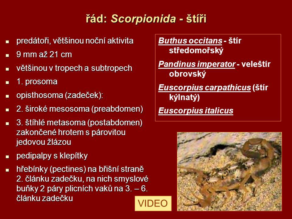 řád: Uropygi - bičovci 180 druhů – subtropických a tropických 180 druhů – subtropických a tropických dlouhý přívěsek z mnoha článků tzv.