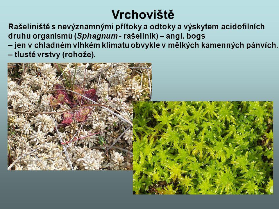 Vrchoviště Rašeliniště s nevýznamnými přítoky a odtoky a výskytem acidofilních druhů organismů (Sphagnum - rašeliník) – angl.