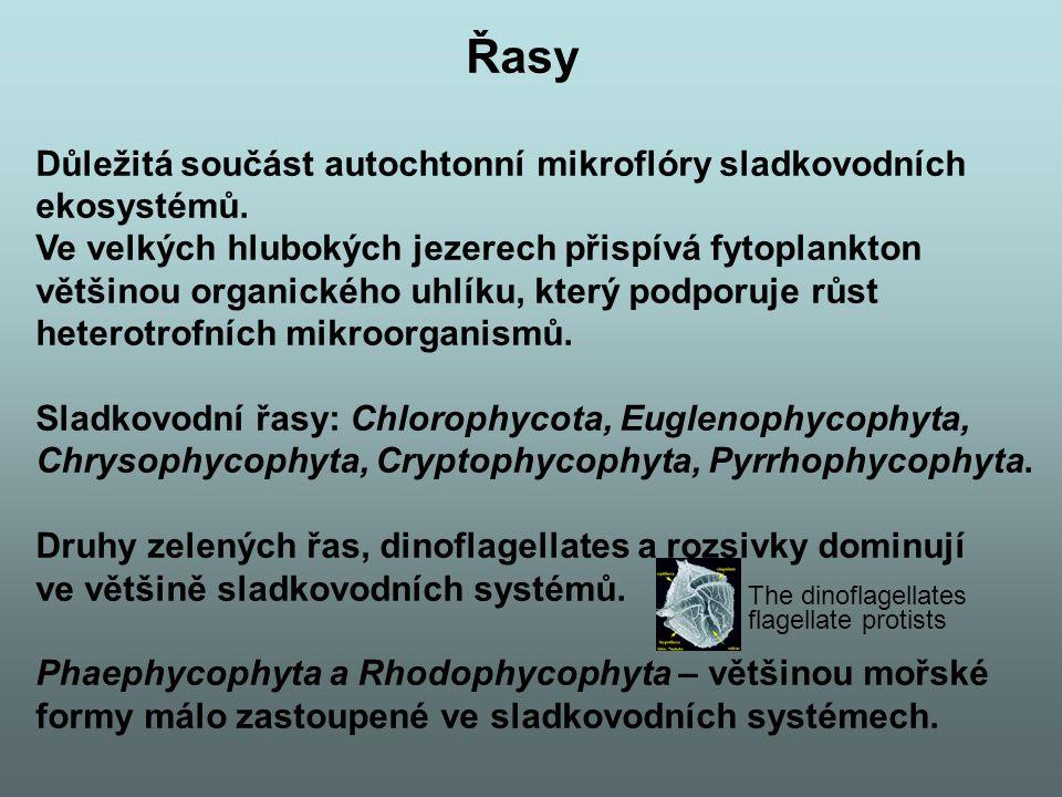 Řasy Důležitá součást autochtonní mikroflóry sladkovodních ekosystémů.