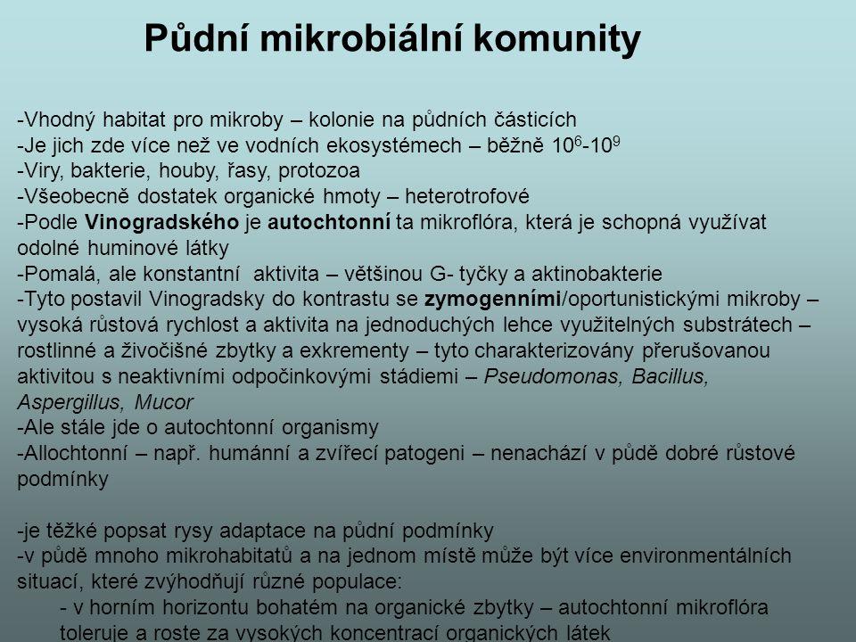 Půdní mikrobiální komunity -Vhodný habitat pro mikroby – kolonie na půdních částicích -Je jich zde více než ve vodních ekosystémech – běžně 10 6 -10 9 -Viry, bakterie, houby, řasy, protozoa -Všeobecně dostatek organické hmoty – heterotrofové -Podle Vinogradského je autochtonní ta mikroflóra, která je schopná využívat odolné huminové látky -Pomalá, ale konstantní aktivita – většinou G- tyčky a aktinobakterie -Tyto postavil Vinogradsky do kontrastu se zymogenními/oportunistickými mikroby – vysoká růstová rychlost a aktivita na jednoduchých lehce využitelných substrátech – rostlinné a živočišné zbytky a exkrementy – tyto charakterizovány přerušovanou aktivitou s neaktivními odpočinkovými stádiemi – Pseudomonas, Bacillus, Aspergillus, Mucor -Ale stále jde o autochtonní organismy -Allochtonní – např.