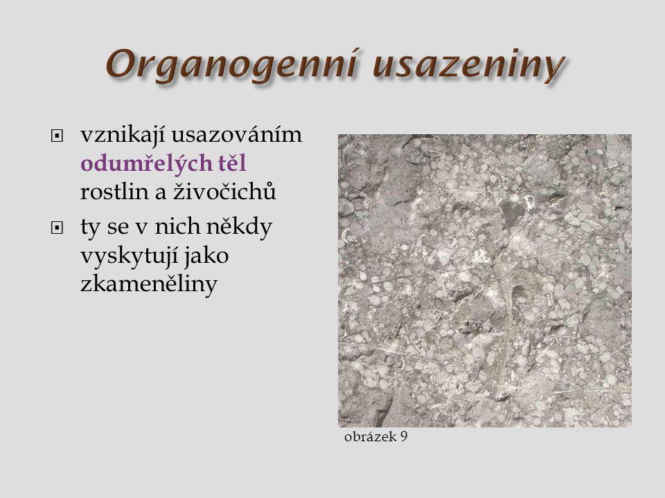 vznikají usazováním odumřelých těl rostlin a živočichů  ty se v nich někdy vyskytují jako zkameněliny obrázek 9
