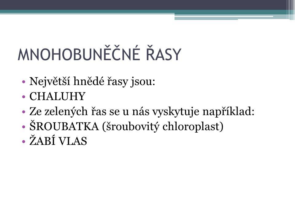 MNOHOBUNĚČNÉ ŘASY Největší hnědé řasy jsou: CHALUHY Ze zelených řas se u nás vyskytuje například: ŠROUBATKA (šroubovitý chloroplast) ŽABÍ VLAS