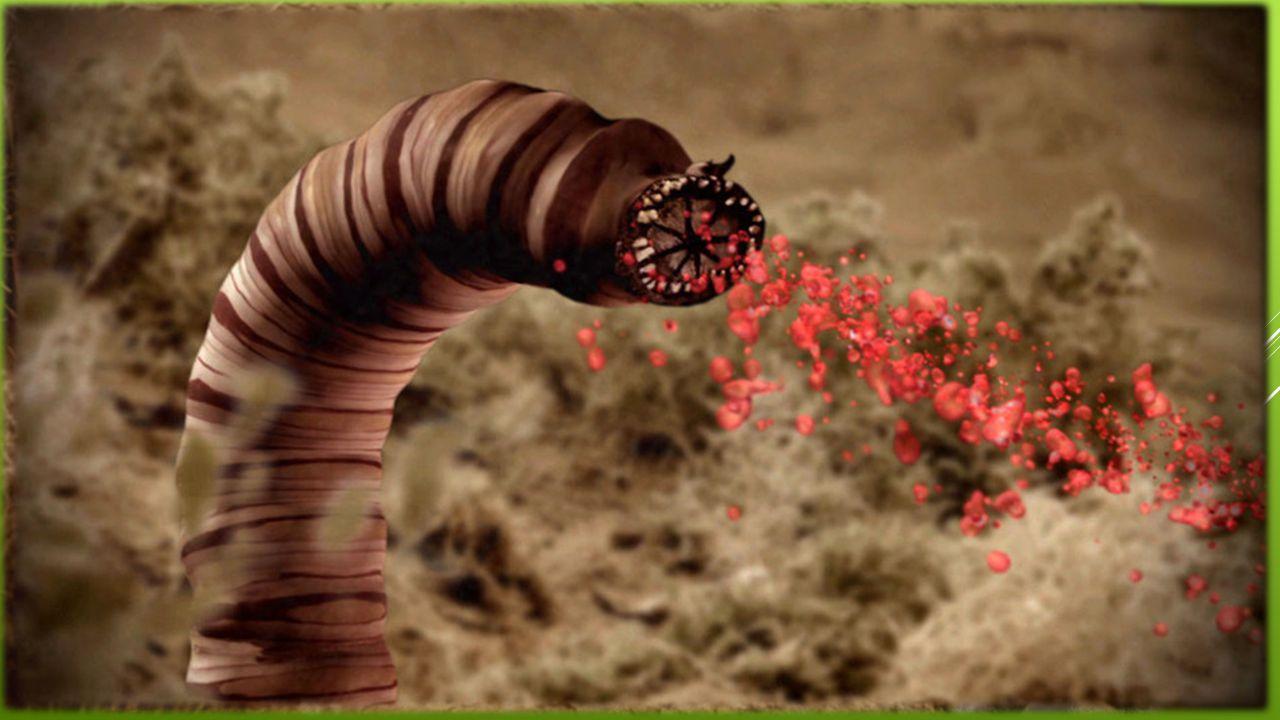 OLGOJ CHORCHOJ  Mýtický živočich  Prý:  dokáže zabít psa, člověka i velblouda  zabijí na dálku  velice nebezpečný živočich  vyskytuje se na pouš