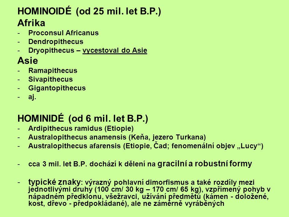 HOMINOIDÉ (od 25 mil. let B.P.) Afrika -Proconsul Africanus -Dendropithecus -Dryopithecus – vycestoval do Asie Asie -Ramapithecus -Sivapithecus -Gigan
