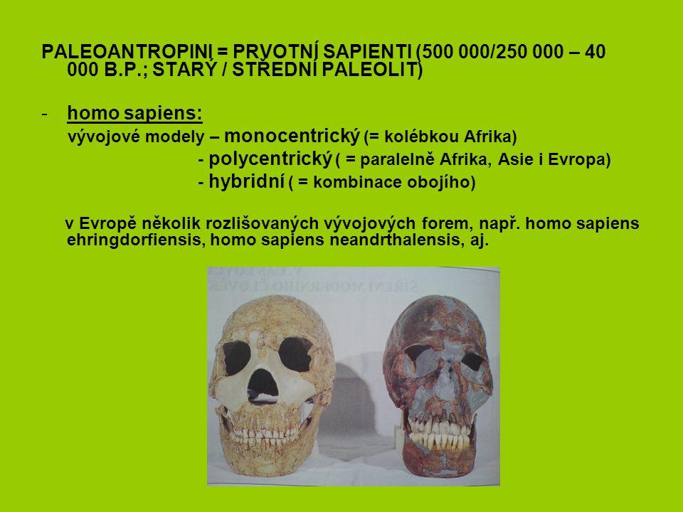 PALEOANTROPINI = PRVOTNÍ SAPIENTI (500 000/250 000 – 40 000 B.P.; STARÝ / STŘEDNÍ PALEOLIT) -homo sapiens: vývojové modely – monocentrický (= kolébkou