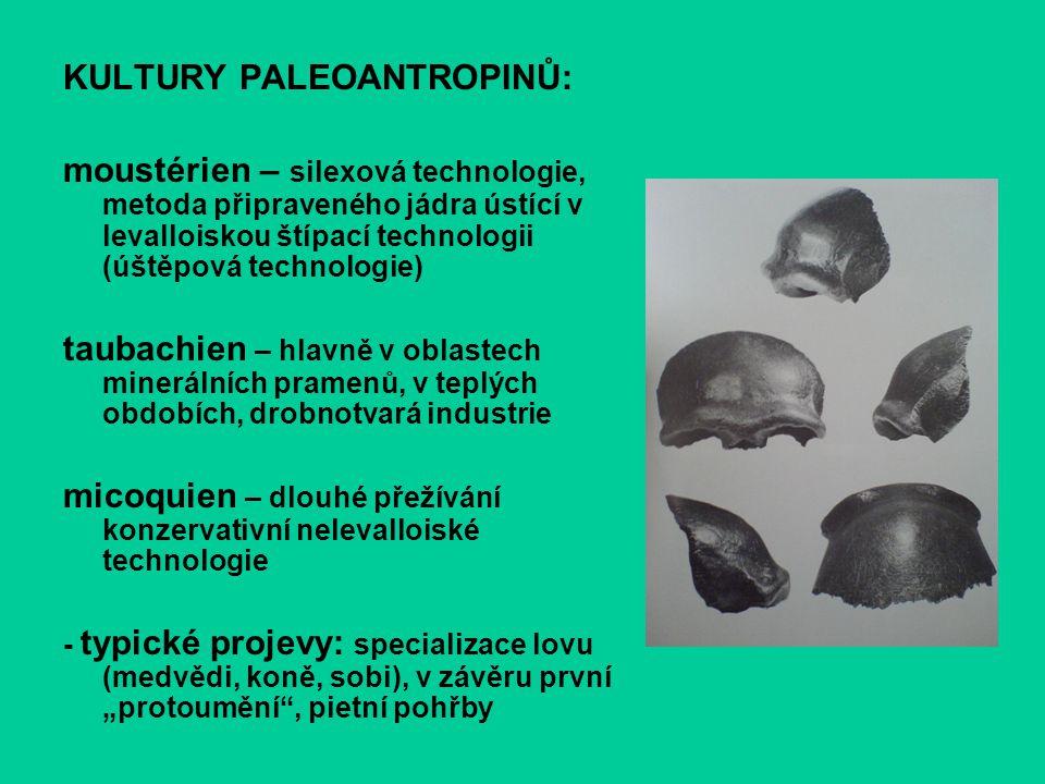 KULTURY PALEOANTROPINŮ: moustérien – silexová technologie, metoda připraveného jádra ústící v levalloiskou štípací technologii (úštěpová technologie)