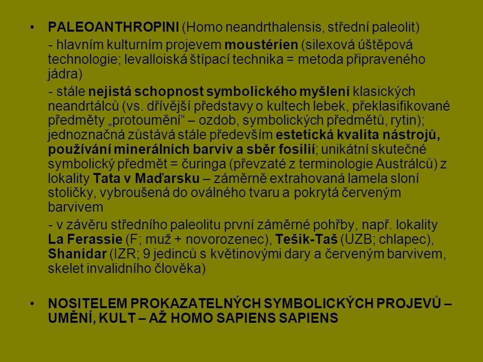 PALEOANTHROPINI (Homo neandrthalensis, střední paleolit) - hlavním kulturním projevem moustérien (silexová úštěpová technologie; levalloiská štípací t