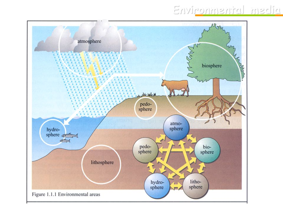 Faktory životního prostředí: Fyzikální faktory: klimatické, sluneční, ionizující, elmg.