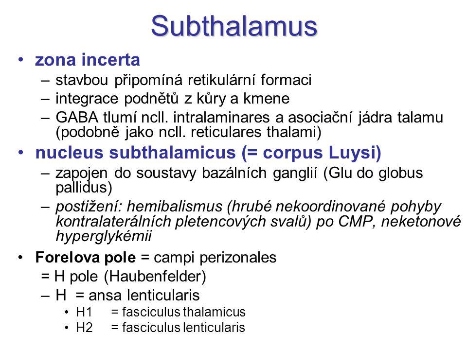 Subthalamus zona incerta –stavbou připomíná retikulární formaci –integrace podnětů z kůry a kmene –GABA tlumí ncll. intralaminares a asociační jádra t