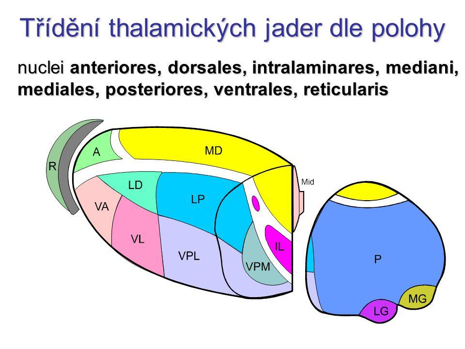 Spoje talamu AF: senzitivní a senzorická –bolest, polohocit, hmat, chuť, rovnováha, sluch, zrak motorická –mozeček, BG RF - ARAS limbický systém –corpus mammillare, hippocampus EF: mozková kůra + hypothalamus reciproční spoje: BG, RF, kůra, kmen, mozeček, mícha