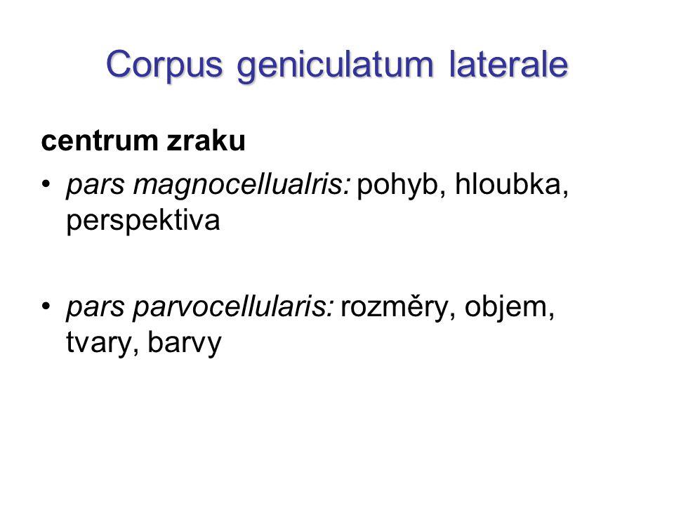 Thalamus opticus 1.nervus opticus 2. chiasma opticum 3.