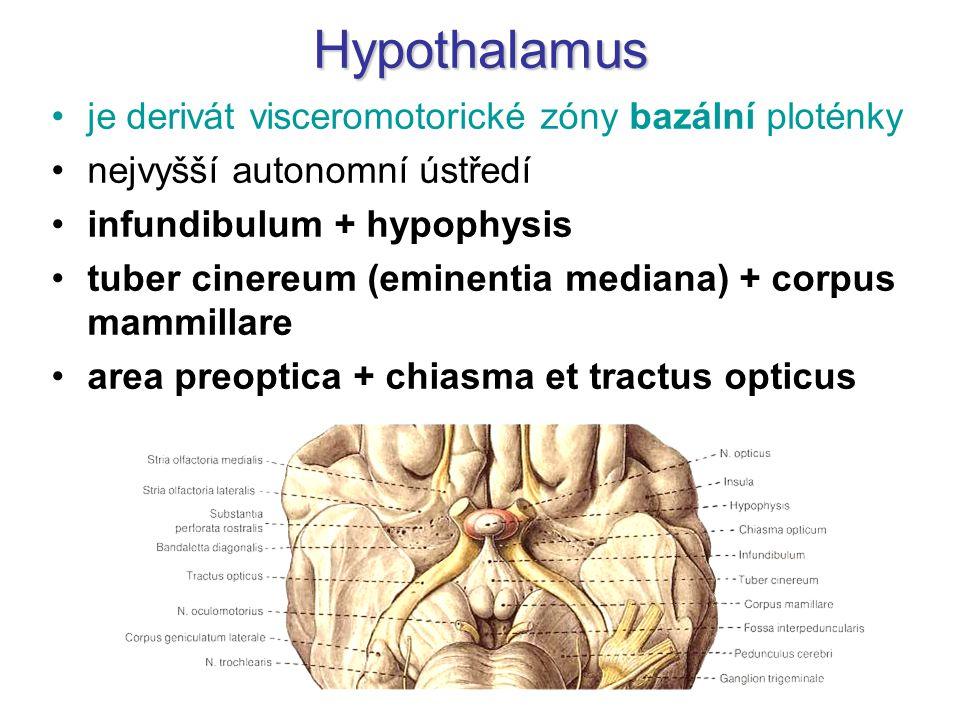 Hypothalamus je derivát visceromotorické zóny bazální ploténky nejvyšší autonomní ústředí infundibulum + hypophysis tuber cinereum (eminentia mediana)