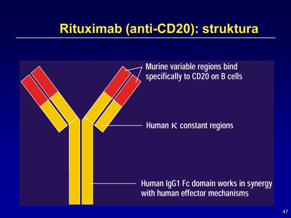 47 Rituximab (anti-CD20): struktura
