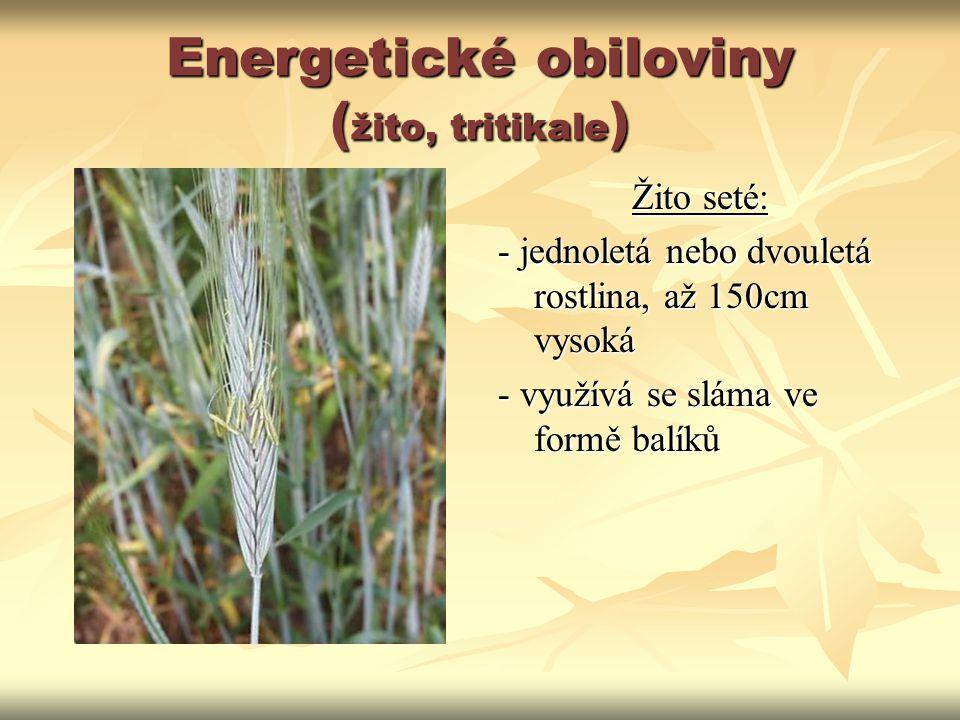 Energetické obiloviny ( žito, tritikale ) Žito seté: - jednoletá nebo dvouletá rostlina, až 150cm vysoká - využívá se sláma ve formě balíků