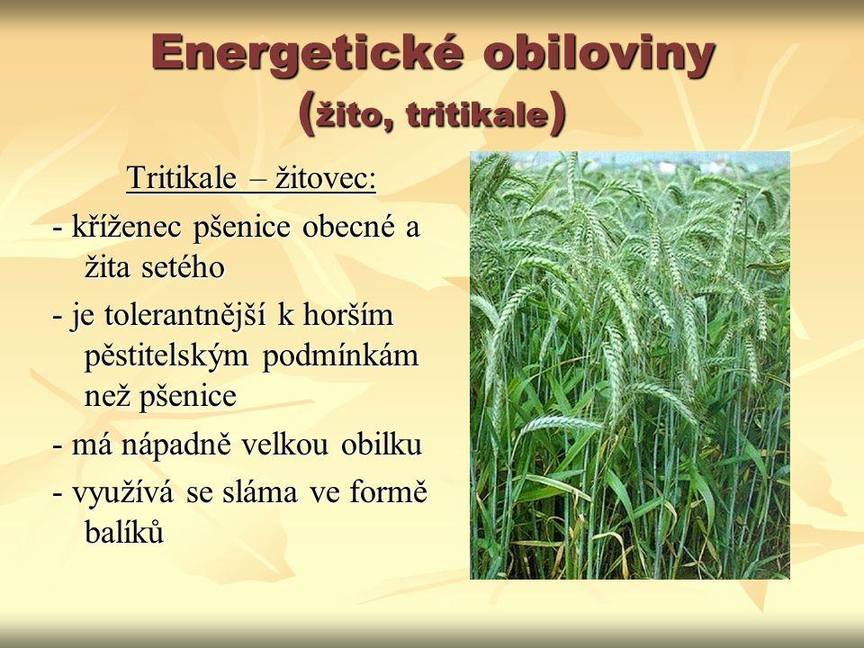 Energetické obiloviny ( žito, tritikale ) Tritikale – žitovec: - kříženec pšenice obecné a žita setého - je tolerantnější k horším pěstitelským podmín