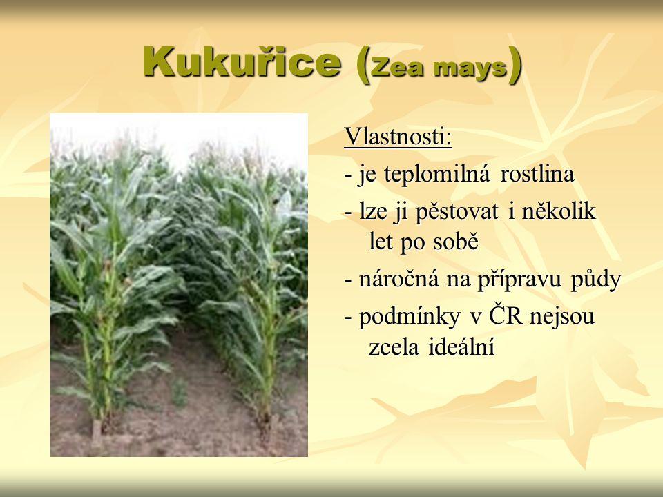 Kukuřice ( Zea mays ) Vlastnosti: - je teplomilná rostlina - lze ji pěstovat i několik let po sobě - náročná na přípravu půdy - podmínky v ČR nejsou z