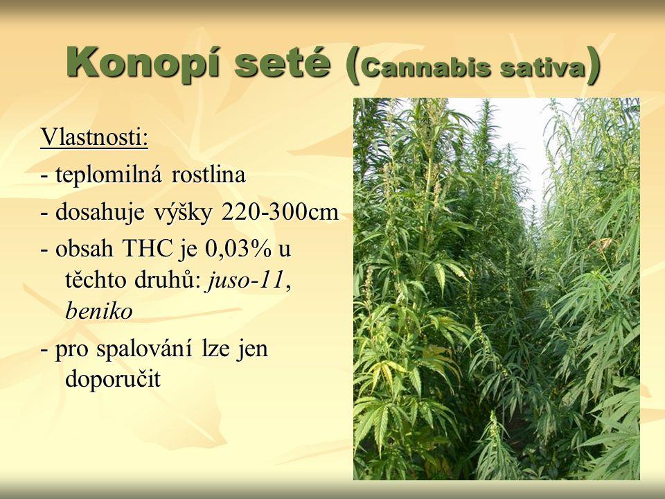 Konopí seté ( Cannabis sativa ) Vlastnosti: - teplomilná rostlina - dosahuje výšky 220-300cm - obsah THC je 0,03% u těchto druhů: juso-11, beniko - pr