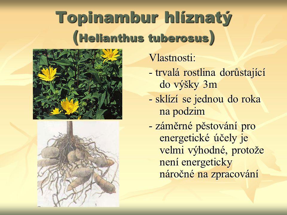 Topinambur hlíznatý ( Helianthus tuberosus ) Vlastnosti: - trvalá rostlina dorůstající do výšky 3m - sklízí se jednou do roka na podzim - záměrné pěst