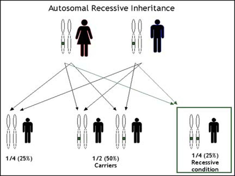 Reprodukční kompenzace Pokud nastal potrat z důvodů prenatálního testování, je velká šance, že rodiče se rozhodnou k dalšímu těhotenství… Pokud nastal potrat z důvodů prenatálního testování, je velká šance, že rodiče se rozhodnou k dalšímu těhotenství… …ve kterém dojde k narození přenašeče …ve kterém dojde k narození přenašeče Pokud například je gen způsobující chorobu vázán na X chromosom, rodina se může rozhodnout k potratu všech eventuálních chlapců, ale dcery, i když nepostižené mohou být přenašečkami Pokud například je gen způsobující chorobu vázán na X chromosom, rodina se může rozhodnout k potratu všech eventuálních chlapců, ale dcery, i když nepostižené mohou být přenašečkami