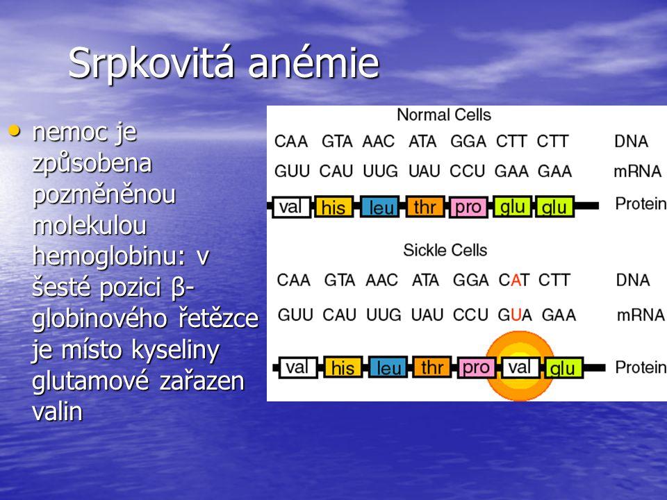 Srpkovitá anémie nemoc je způsobena pozměněnou molekulou hemoglobinu: v šesté pozici β- globinového řetězce je místo kyseliny glutamové zařazen valin nemoc je způsobena pozměněnou molekulou hemoglobinu: v šesté pozici β- globinového řetězce je místo kyseliny glutamové zařazen valin