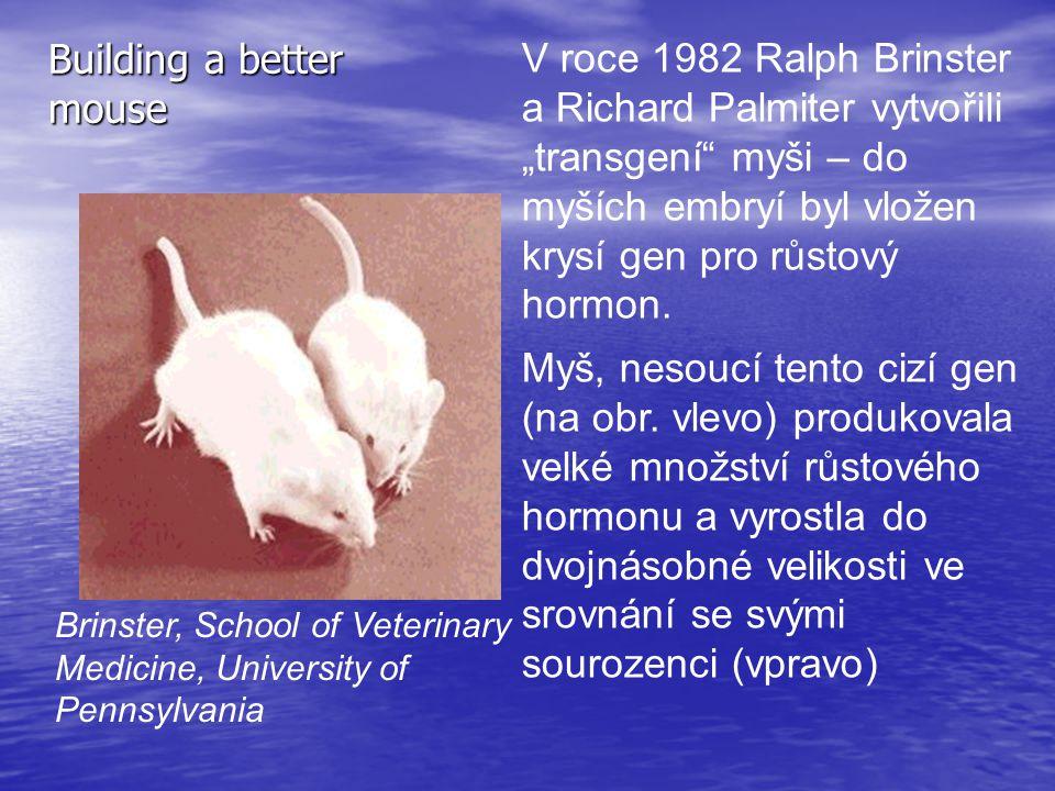 """Building a better mouse V roce 1982 Ralph Brinster a Richard Palmiter vytvořili """"transgení"""" myši – do myších embryí byl vložen krysí gen pro růstový h"""
