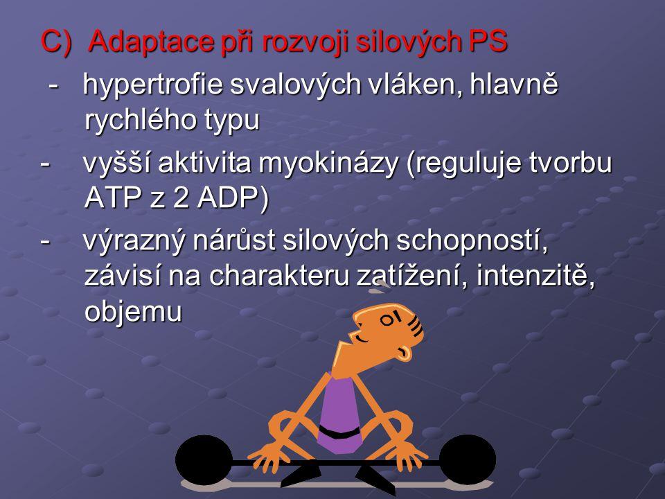 C) Adaptace při rozvoji silových PS - hypertrofie svalových vláken, hlavně rychlého typu - hypertrofie svalových vláken, hlavně rychlého typu - vyšší