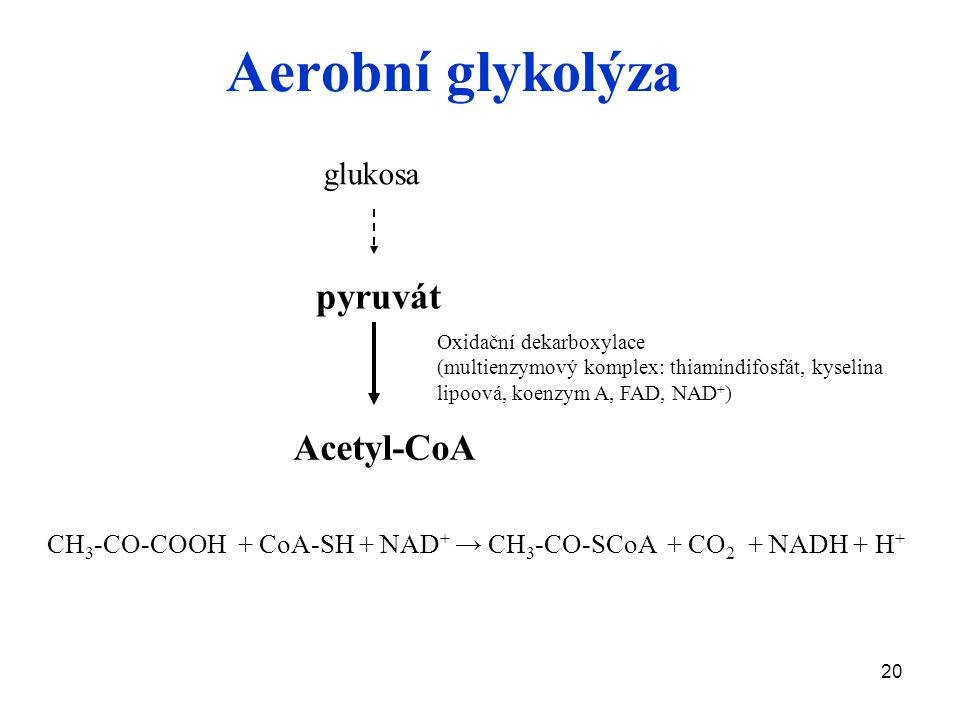 20 Aerobní glykolýza glukosa Acetyl-CoA Oxidační dekarboxylace (multienzymový komplex: thiamindifosfát, kyselina lipoová, koenzym A, FAD, NAD + ) pyruvát CH 3 -CO-COOH + CoA-SH + NAD + → CH 3 -CO-SCoA + CO 2 + NADH + H +