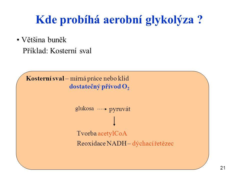 21 Kde probíhá aerobní glykolýza ? Většina buněk Příklad: Kosterní sval glukosa pyruvát Tvorba acetylCoA Reoxidace NADH – dýchací řetězec Kosterní sva