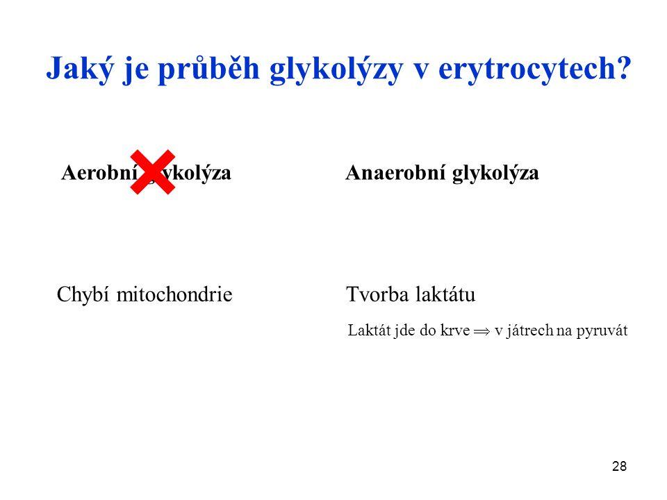 28 Chybí mitochondrie Tvorba laktátu Laktát jde do krve  v játrech na pyruvát Jaký je průběh glykolýzy v erytrocytech.