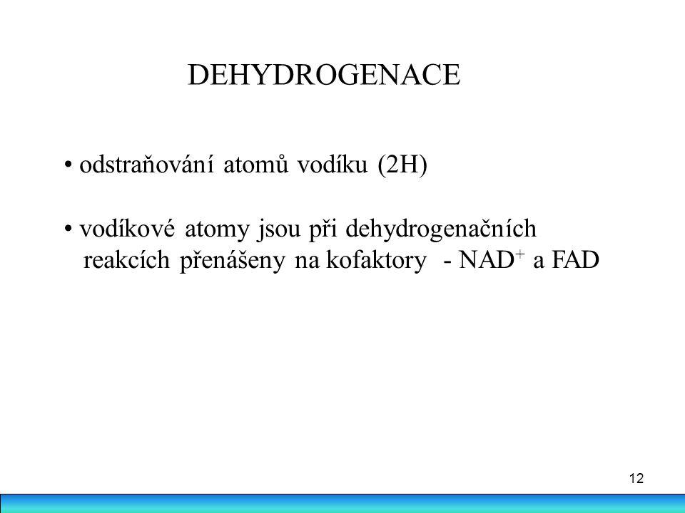 12 DEHYDROGENACE odstraňování atomů vodíku (2H) vodíkové atomy jsou při dehydrogenačních reakcích přenášeny na kofaktory - NAD + a FAD