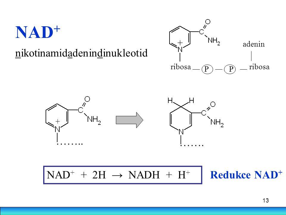 13 NAD + NAD + + 2H → NADH + H + Redukce NAD + + ribosa PP adenin nikotinamidadenindinukleotid …….. ……. +