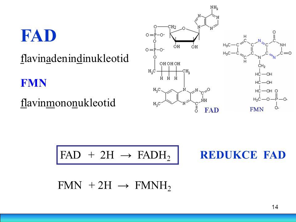14 FAD FAD + 2H → FADH 2 FMN + 2H → FMNH 2 REDUKCE FAD flavinadenindinukleotid FMN flavinmononukleotid FAD