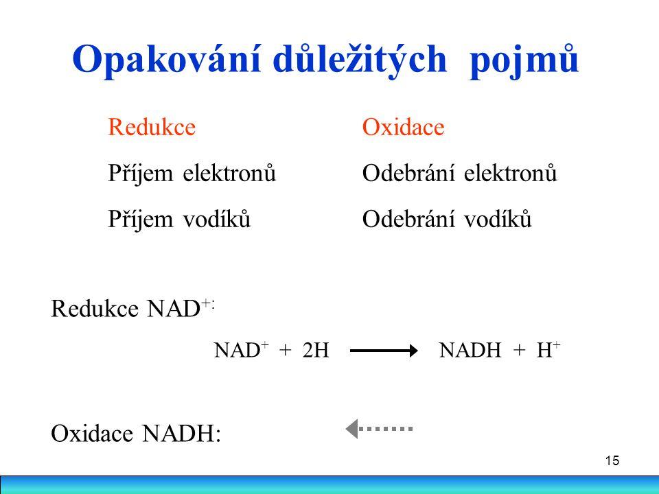 15 Opakování důležitých pojmů Redukce Příjem elektronů Příjem vodíků Oxidace Odebrání elektronů Odebrání vodíků Redukce NAD +: NAD + + 2H NADH + H + O