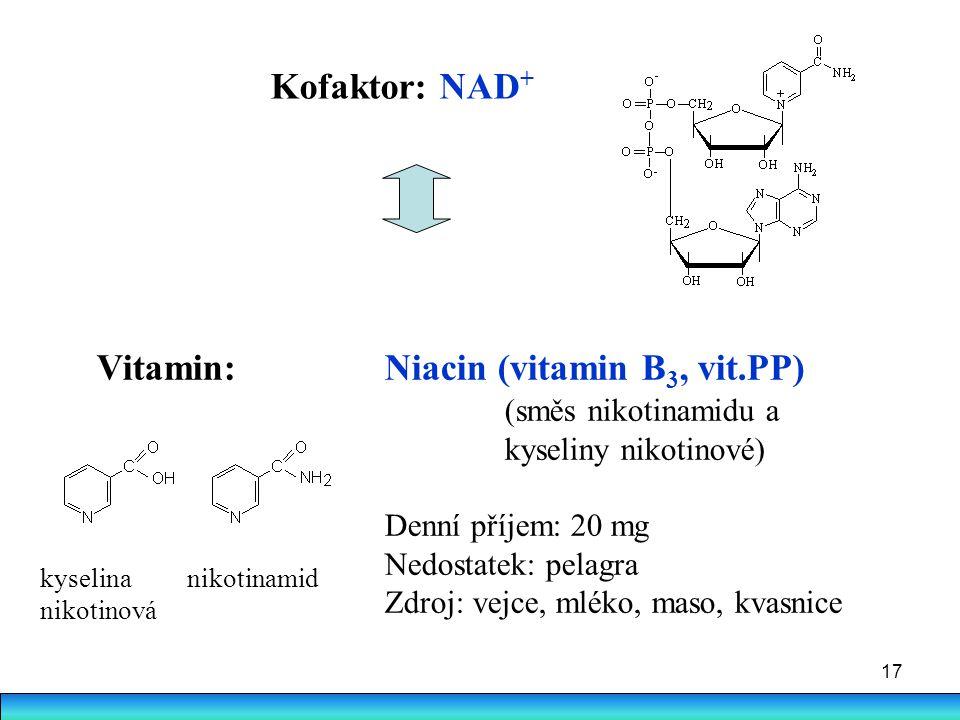 17 Vitamin:Niacin (vitamin B 3, vit.PP) (směs nikotinamidu a kyseliny nikotinové) Denní příjem: 20 mg Nedostatek: pelagra Zdroj: vejce, mléko, maso, k