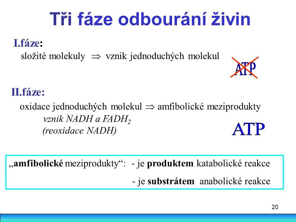 20 Tři fáze odbourání živin I.fáze: složité molekuly  vznik jednoduchých molekul II.fáze: oxidace jednoduchých molekul  amfibolické meziprodukty vzn