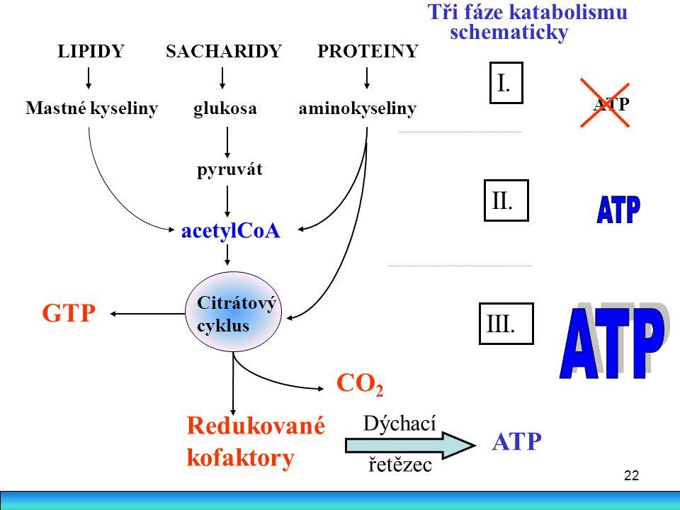 22 ATP LIPIDY SACHARIDY PROTEINY Mastné kyseliny glukosa aminokyseliny pyruvát acetylCoA I. GTP Citrátový cyklus CO 2 II. III. Redukované kofaktory AT