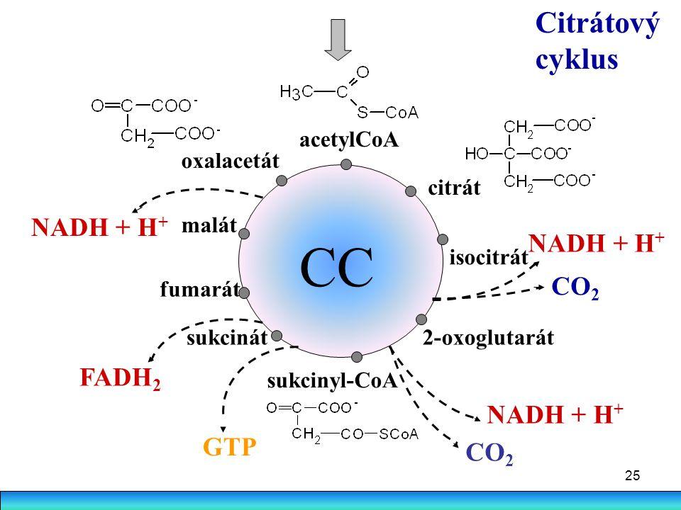 25 Citrátový cyklus CC acetylCoA citrát isocitrát 2-oxoglutarát sukcinyl-CoA fumarát malát oxalacetát NADH + H + CO 2 NADH + H + CO 2 sukcinát GTP FAD