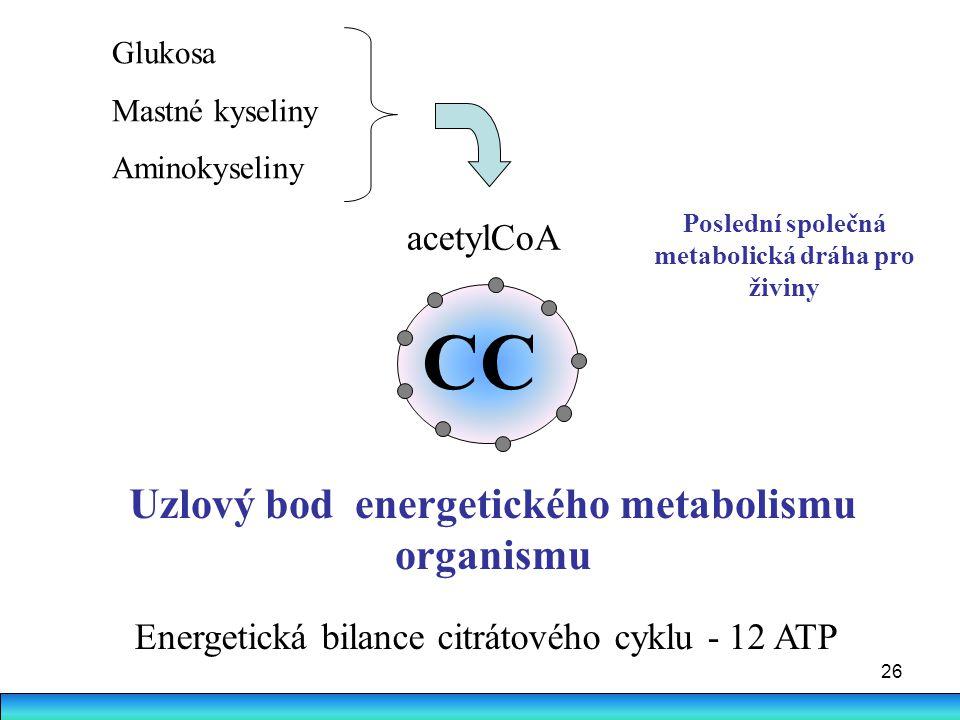 26 CC acetylCoA Glukosa Mastné kyseliny Aminokyseliny Uzlový bod energetického metabolismu organismu Poslední společná metabolická dráha pro živiny En