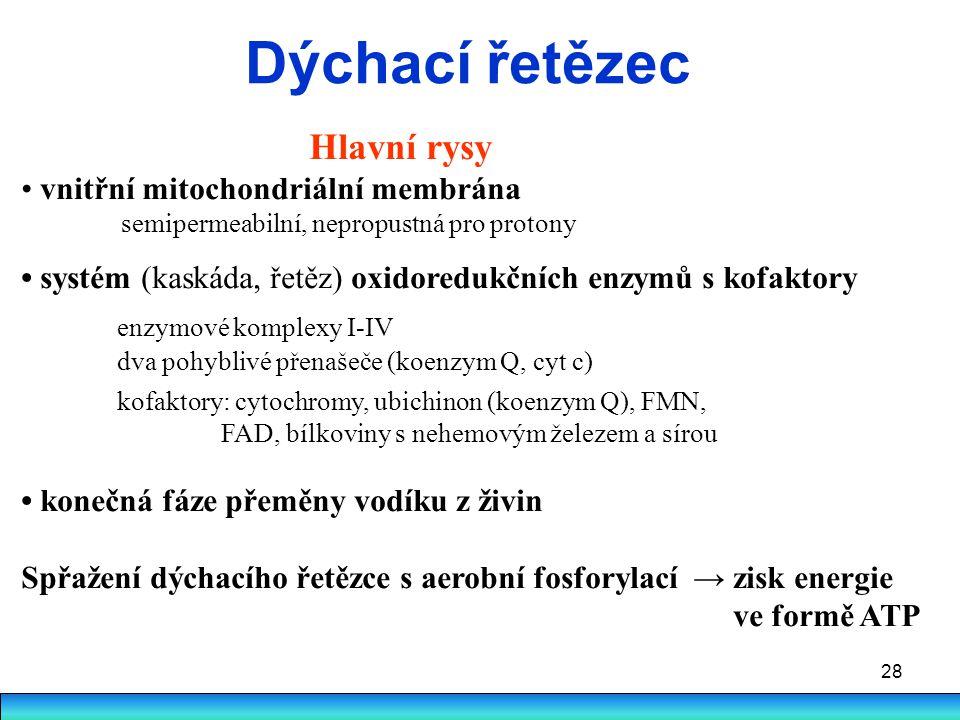 28 Dýchací řetězec Hlavní rysy vnitřní mitochondriální membrána semipermeabilní, nepropustná pro protony systém (kaskáda, řetěz) oxidoredukčních enzym